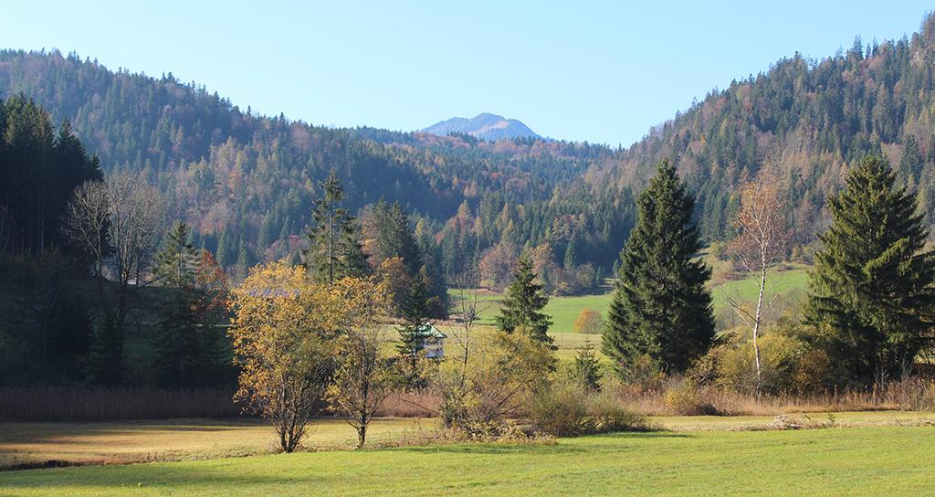 Blick auf Wiesen und Waldflächen der Mühlau im Gebiet Oberaudorf / Kiefersfelden